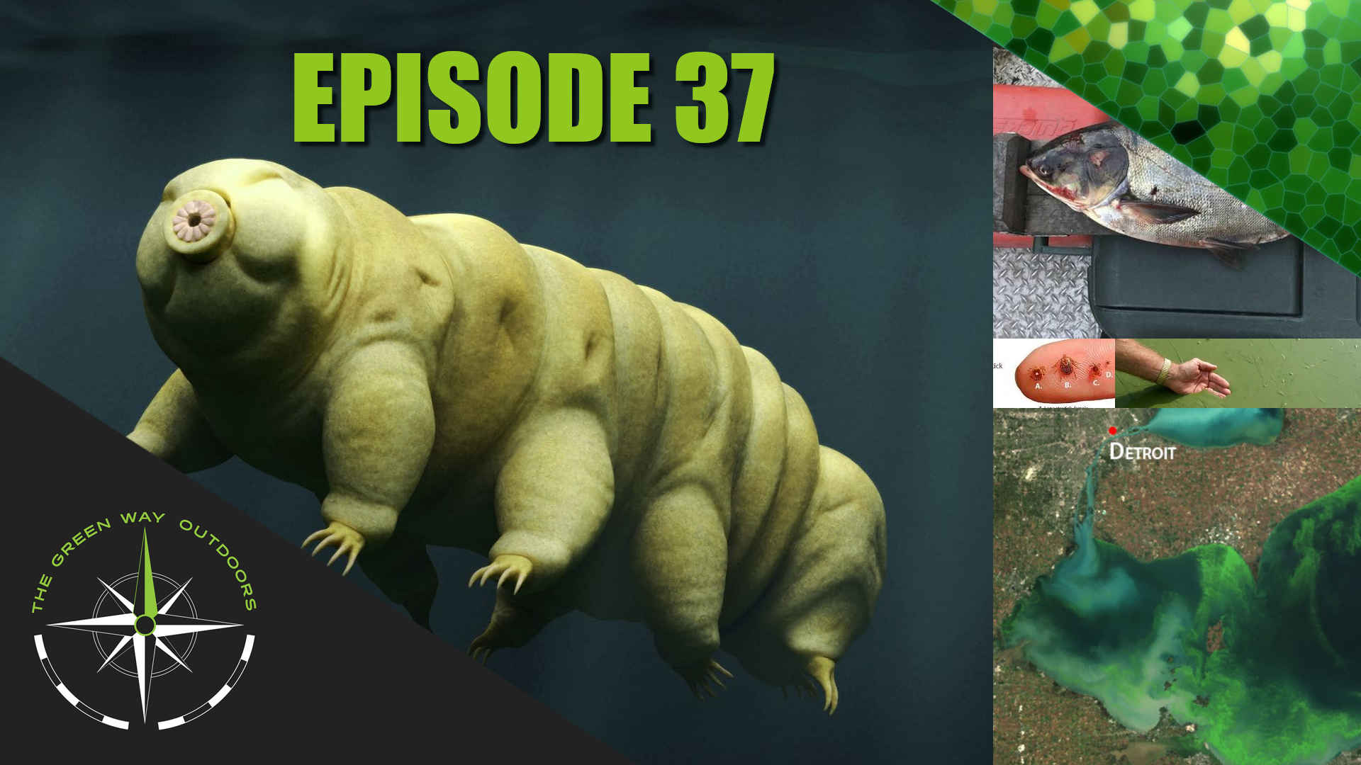 The Green Way Outdoors - Episode 37 - Tardigrades
